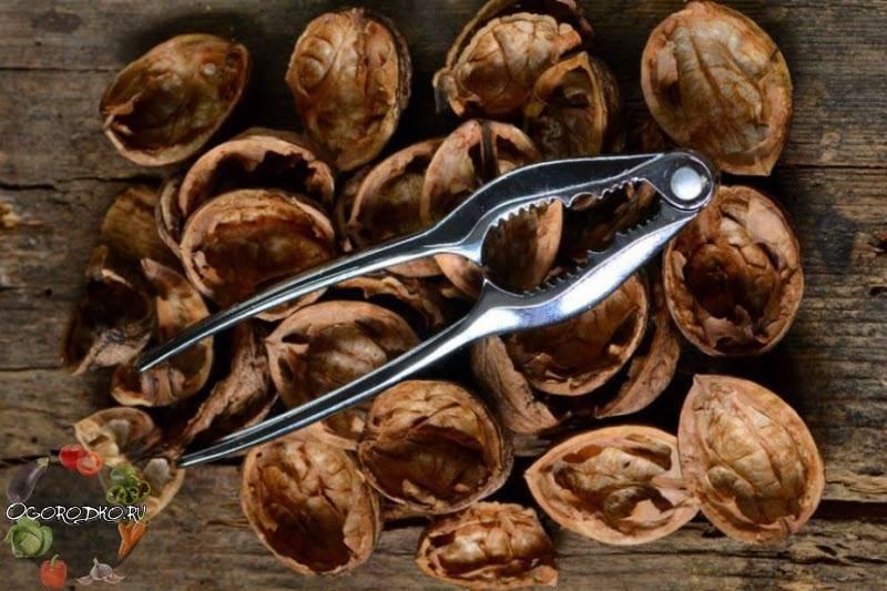 Скорлупа грецкого ореха: лечебные свойства и применение (настойки, отвары, зола, порошок)