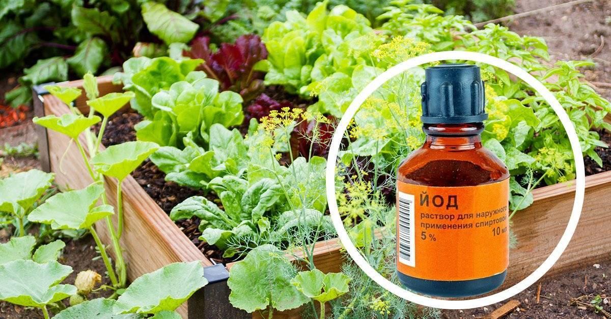 Как пользоваться зеленым мылом в садоводстве для борьбы с вредителями