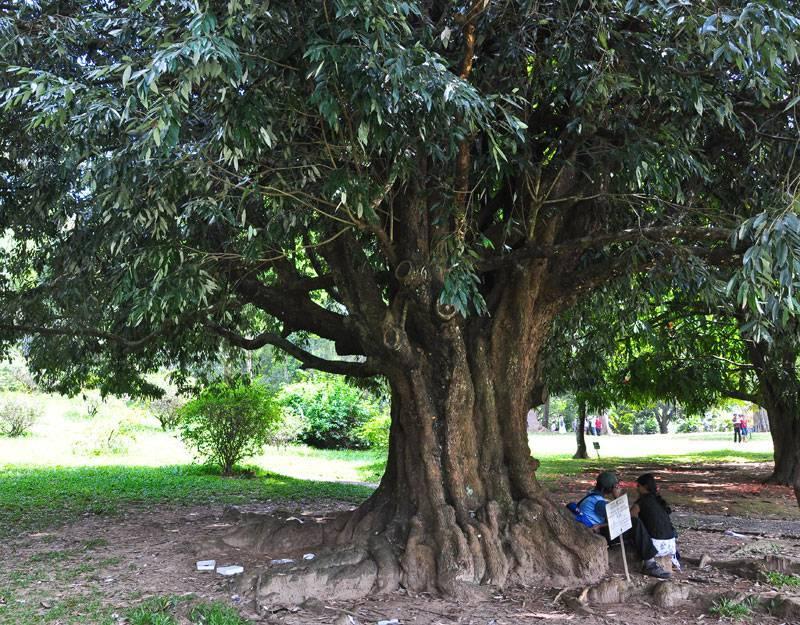 Натуральное дерево как материал для отделки и декора интерьера
