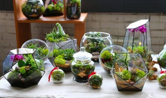 Виды выращиваемого в домашних условиях каланхоэ