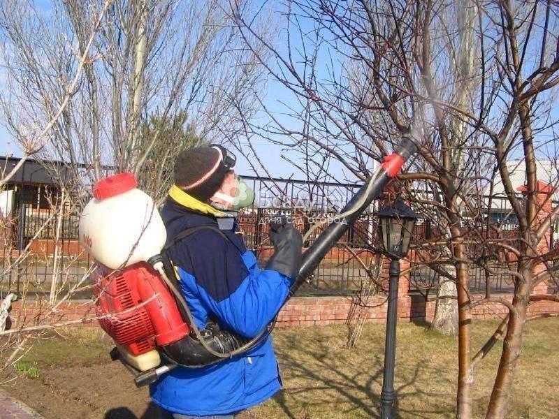 Что не нужно делать в саду весной – 10 самых бесполезных весенних работ