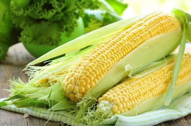 Сроки посадки кукурузы в Подмосковье