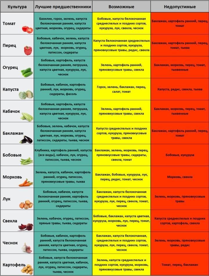 Таблица севооборота на огороде: правила чередования овощей