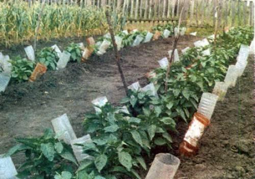 Применение пластиковых бутылок для полива огорода и сада