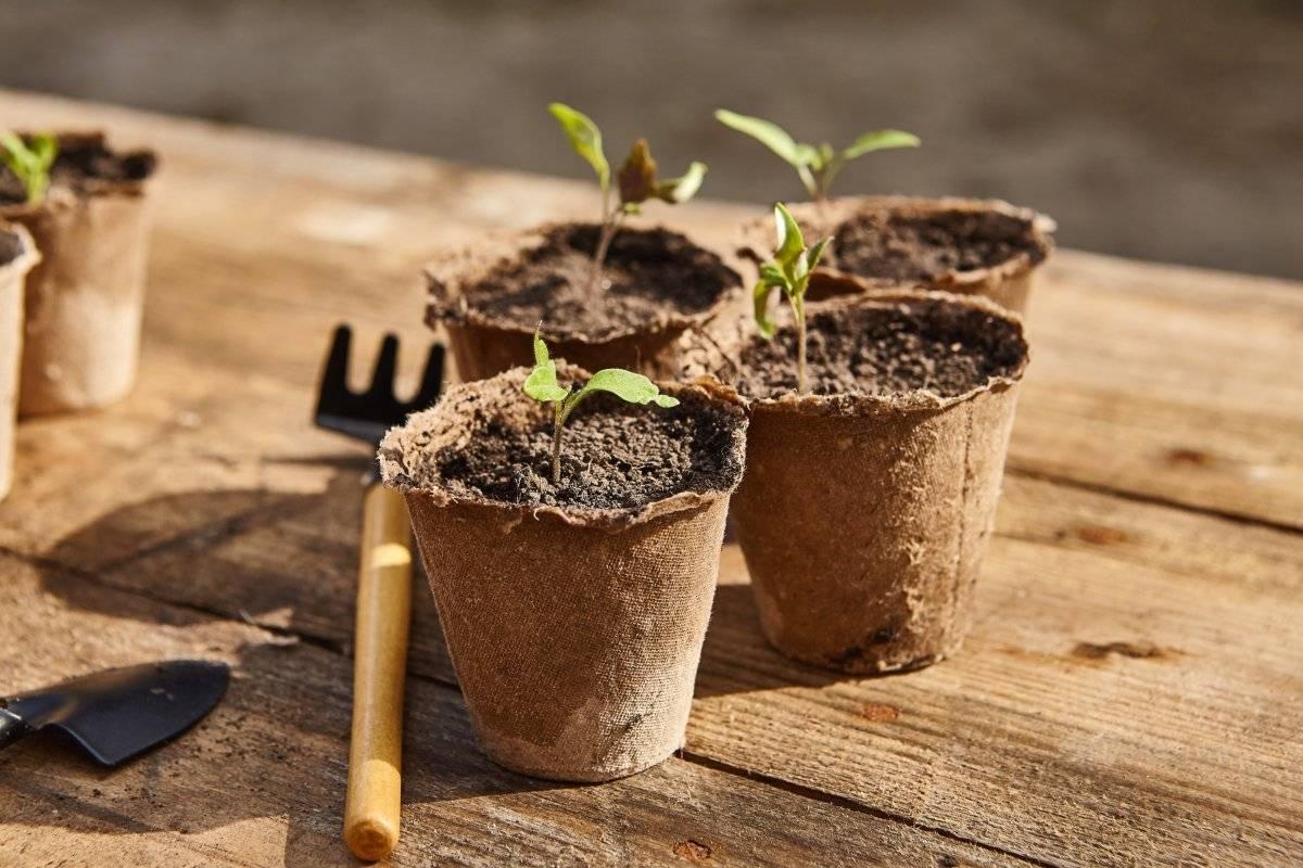 Как подготовить землю (грунт) для рассады в домашних условиях