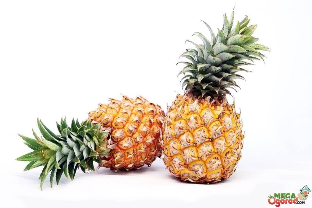 Цветение и плодоношение ананасов в домашних условиях