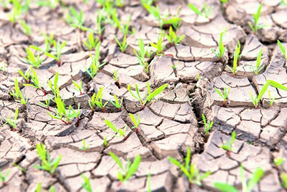 Виды органических удобрений и их применение на даче, видео