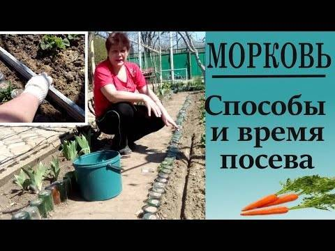 Как вырастить морковь в открытом грунте