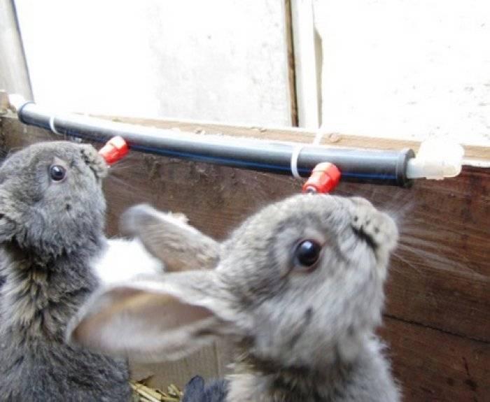 Как оборудовать удобные поилки для кроликов без лишних затрат