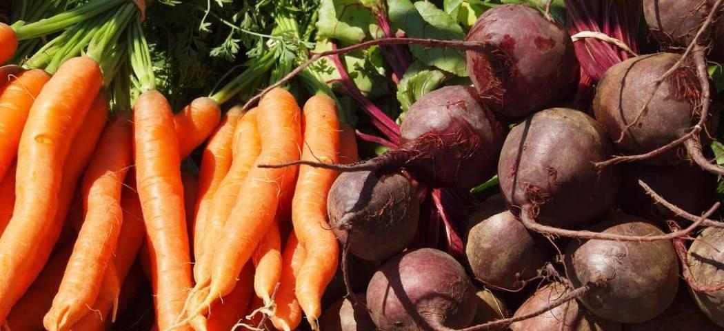 Как заработать на выращивании зелени