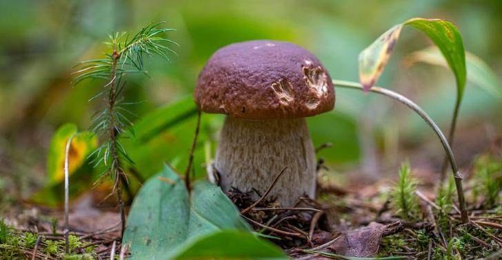 Съедобные виды белых грибов: их отличия и преимущества. как выглядит жёлчный гриб, и можно ли его есть какой гриб называют белым