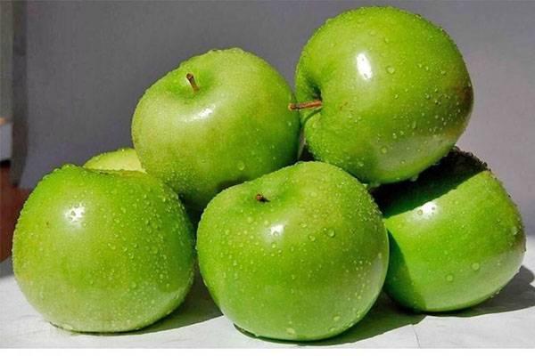 Выращивание позднезимнего сорта яблони северный синап