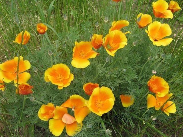 Выращиваем цветочную рассаду самостоятельно