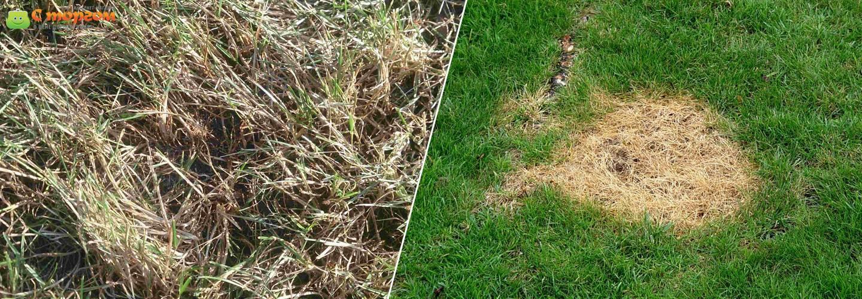 Уход за газоном после зимы: вычесывание, аэрация, подсеивание
