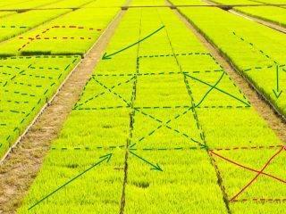 Сколько соток в гектаре земли