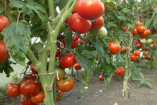 Азофоска: удобрение, инструкция по применению на огороде и саду