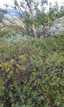 Декоративные злаки и травы в ландшафтном дизайне, фото и названия, видео