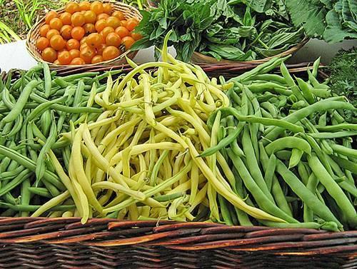Выбираем для своего огорода фасоль