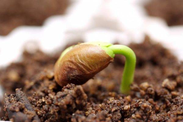 Стратификация семян – подробная инструкция с фото