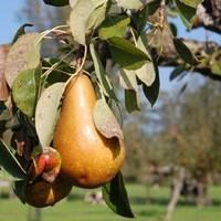 Какие вредители и болезни встречаются на плодовых деревьях и как с ними бороться
