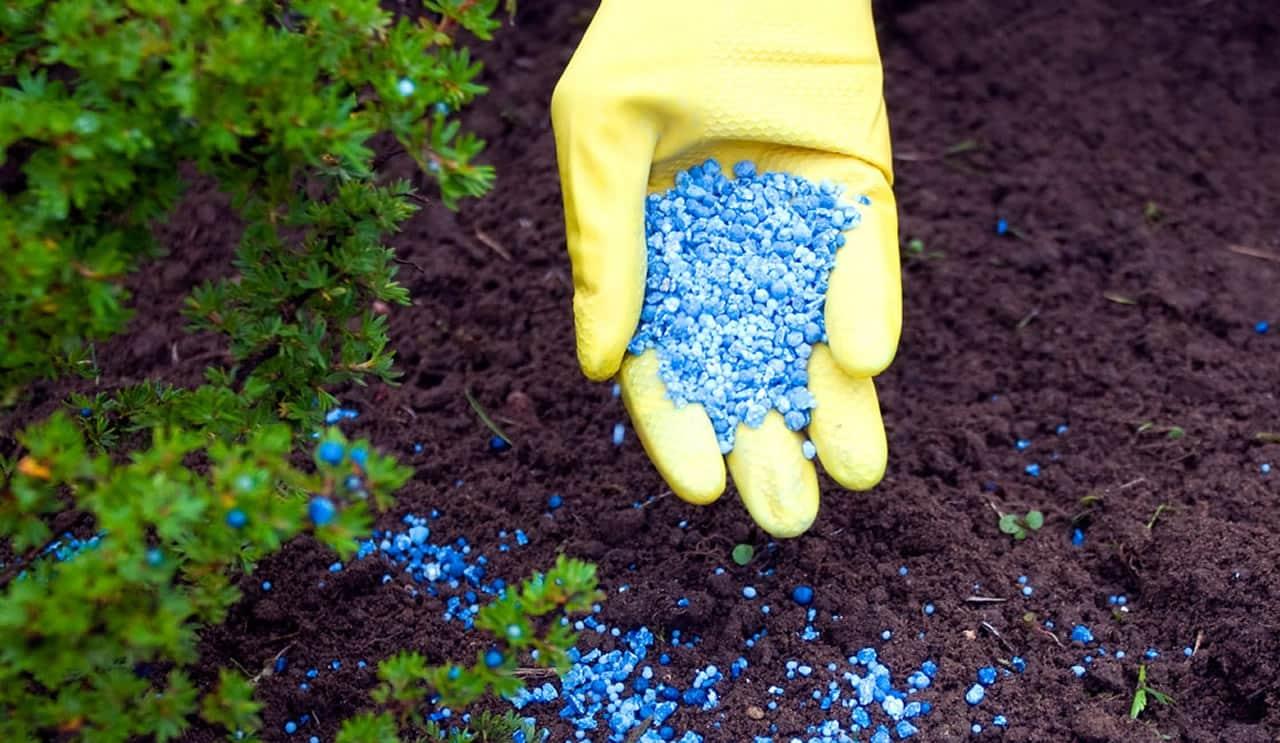 Органические удобрения — как использовать органику на участке