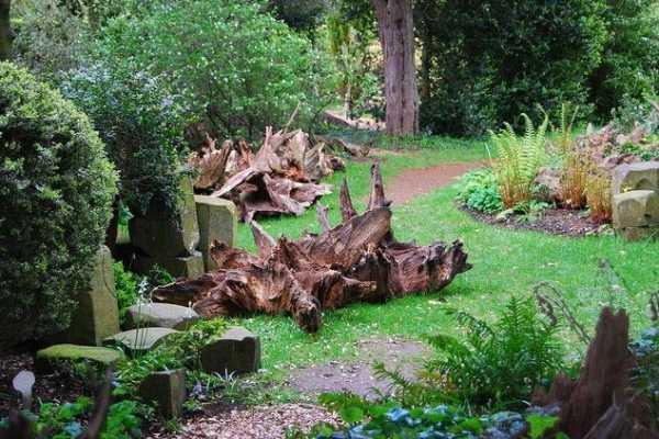 Удивительный рутарий – сад корней на вашем участке. рутарий на участке — фото и примеры старые пни и коряги рутарий в саду