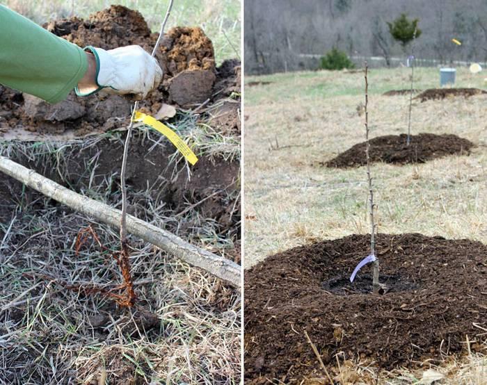 Как правильно расположить теплицу, деревья и кусты на садовом участке