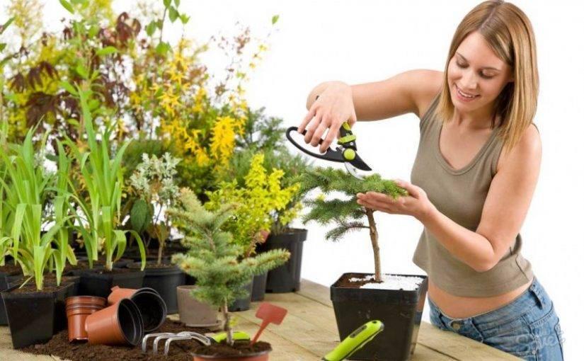 Зола – отличное средство для подкормки и защиты цветов