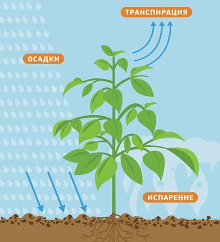 Клонирование растений — современный подход к вегетативному размножению