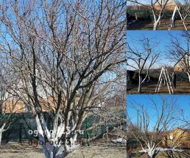 Первостепенные садовые работы в феврале