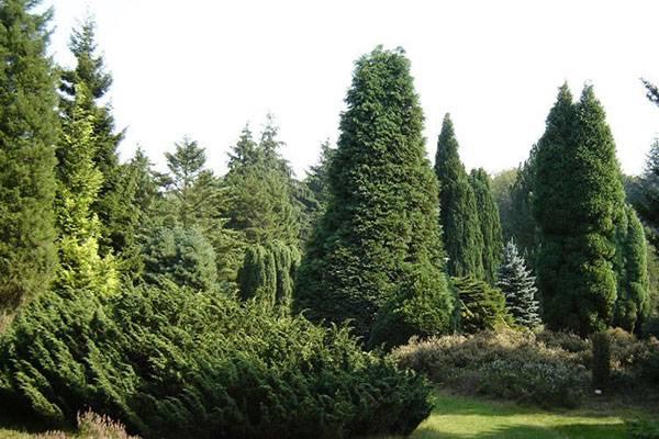 Трёхэтажные деревья — удивительные изобретения!
