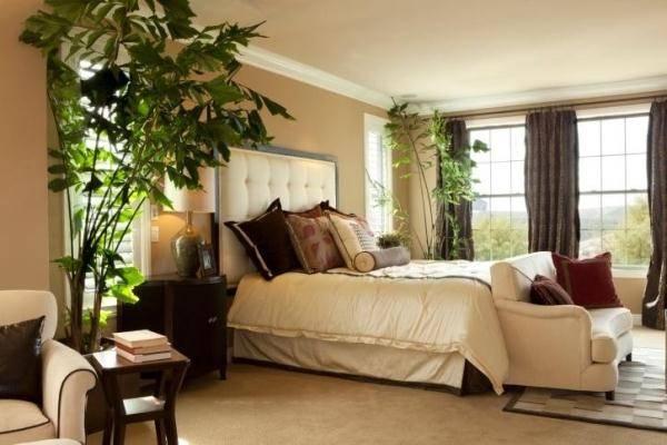 Какие цветы можно ставить в спальне