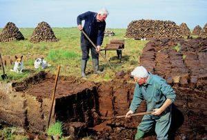 Чем удобрять клубнику и когда? когда и чем удобряют клубнику опытные огородники, чтобы получить хороший урожай