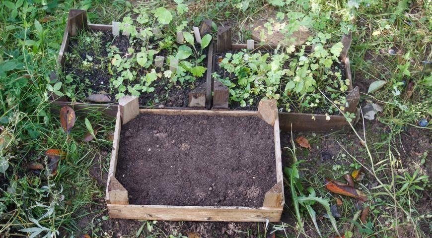 Условия выращивания туи из семени: посадка в домашних условиях