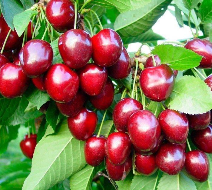 Как поливать плодовые деревья осенью – секреты влагозарядного полива