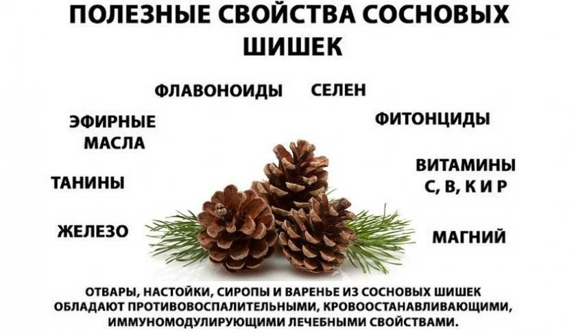 Варенье из сосновых шишек: польза и вред. рецепт варенья из молодых сосновых шишек с медом, лимоном, в мультиварке, детям