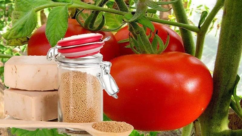 Кольраби выращивание и уход