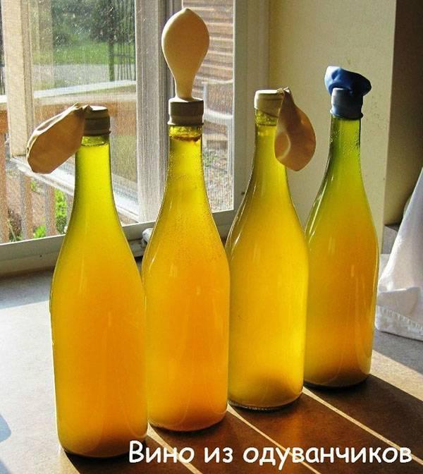 Готовим вино из одуванчиков дома