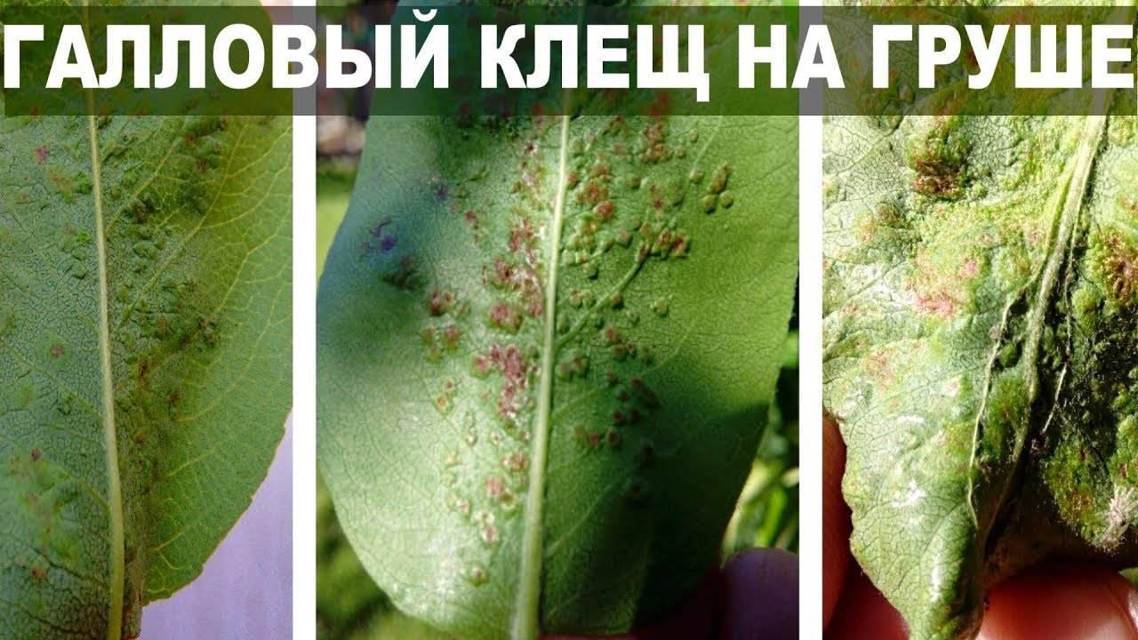 Эффективные методы борьбы с долгоносиком на яблоне: проверенные инсектициды и народные средства