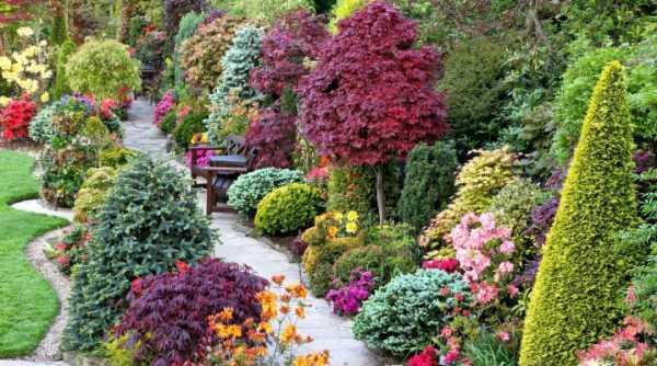 Декоративные кустарники для дачи, фото и названия — какие выбрать