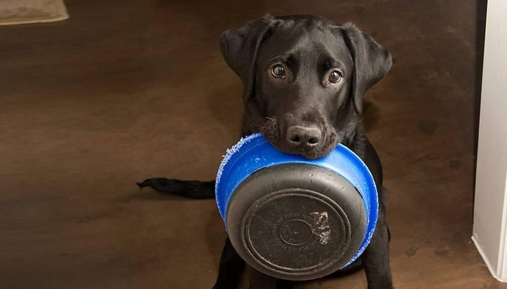 «роял канин»: отзывы и советы ветеринаров
