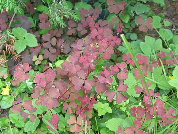 7 естественных и нетоксичных методов борьбы с сорняками на территории двора