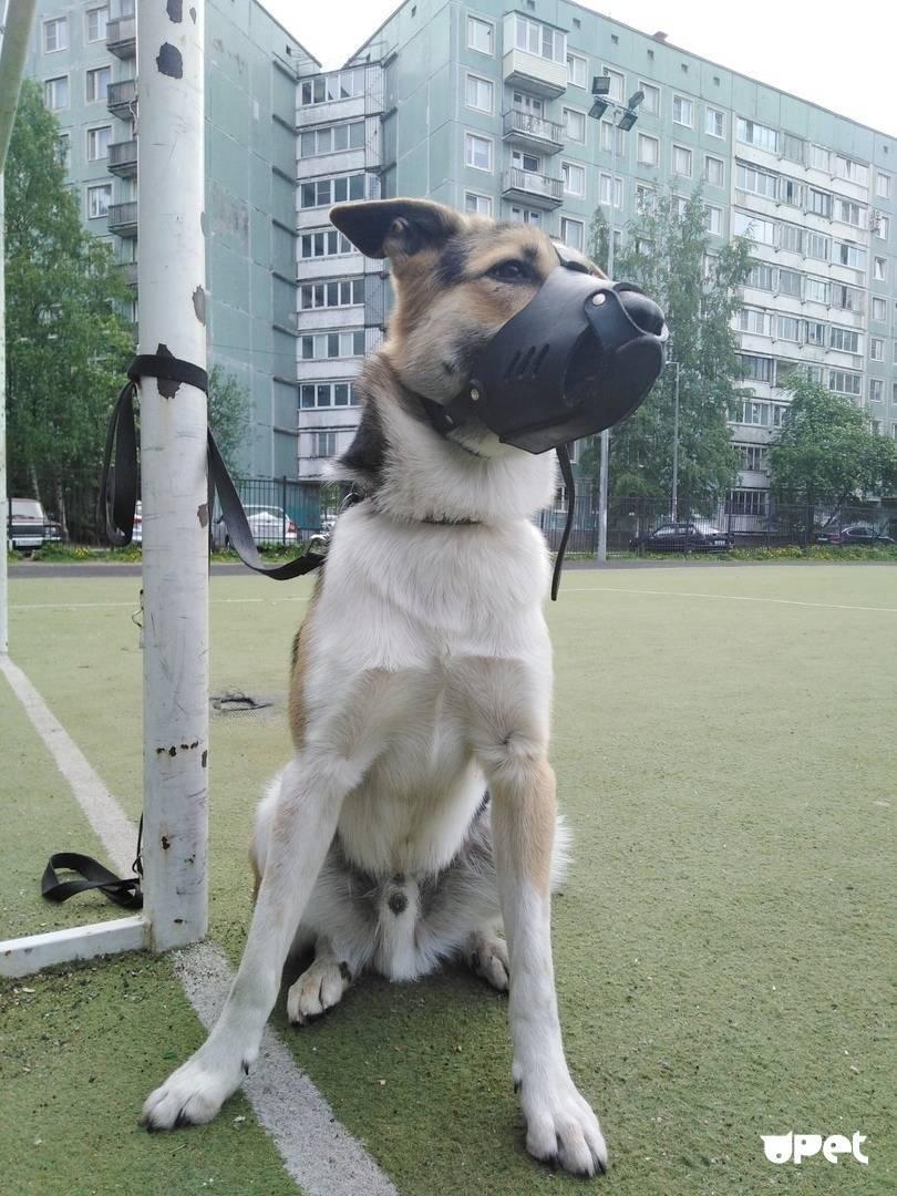 Вольер для собаки своими руками – пошаговая инструкция с чертежами, размерами, фото и видео