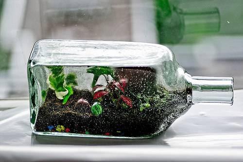 Клумба в красно-лазоревых тонах: виды и сорта сальвии для сада
