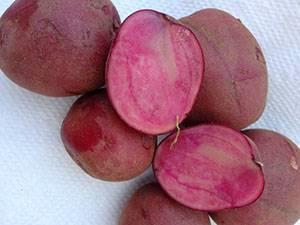 Кормовые сорта картофеля