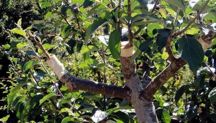 8 способов размножения декоративных кустарников