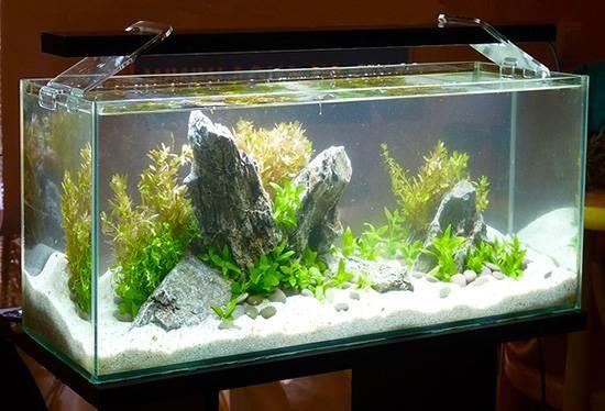 Расчет оптимального освещения для аквариума
