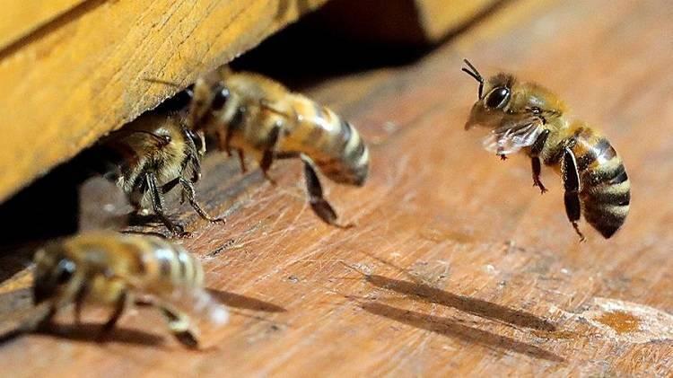 Устройство и расположение пчелиного улья