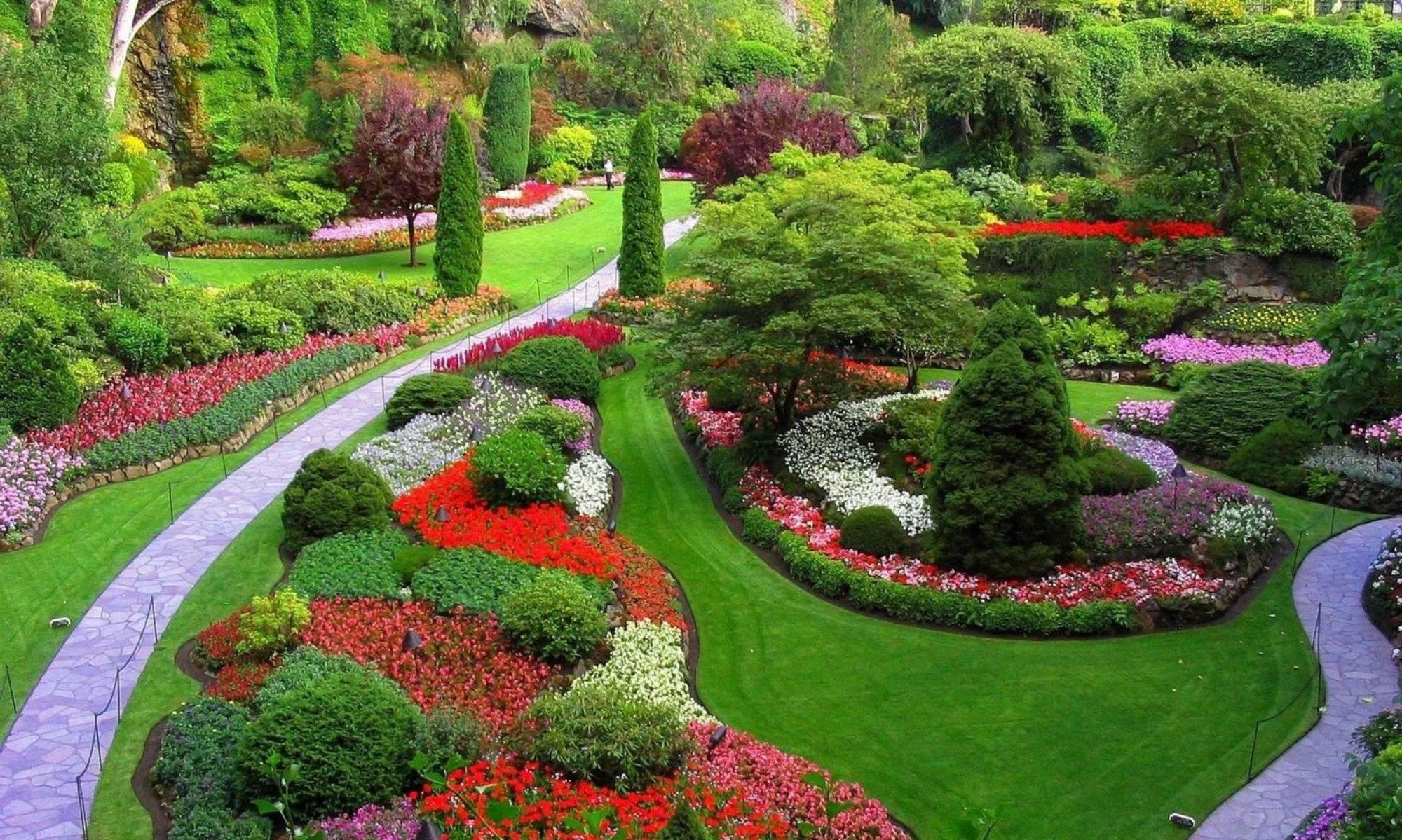 Розы в ландшафтном дизайне – мифы и реальность