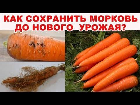 Советы огородникам и хозяйкам, как сохранить морковь до весны свежей